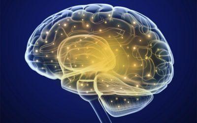 A világbéke idegélettana – 3. rész:  Kvantumhatások a tudatban és az agy