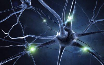 TM és neuroplaszticitás – agyunk megújítja önmagát